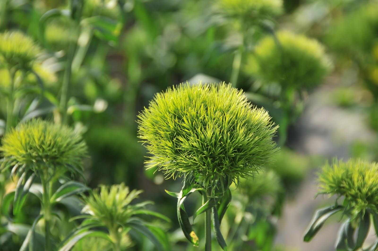 Catalogul florilor | Green Trick